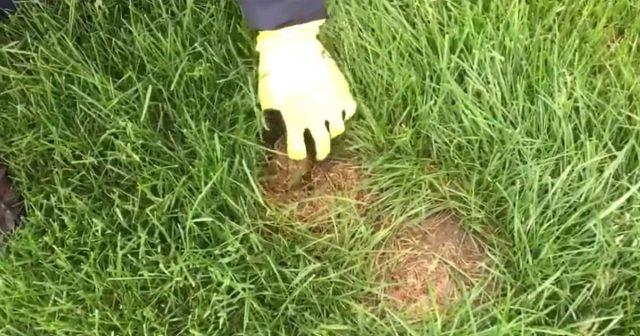 Se vedi questa macchia marrone in mezzo all 39 erba fermati - Cosa mettere al posto dell erba in giardino ...