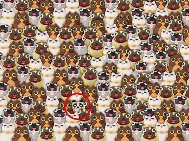 Картинки по запросу найти панду на картинке