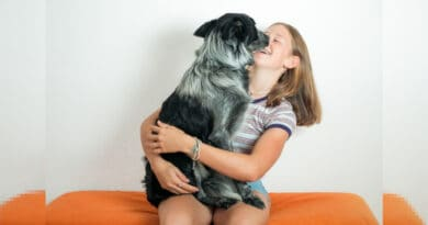 5 errori che commettiamo con i nostri cani e possono influire sulla loro salute