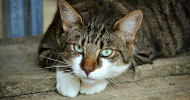 Il tuo gatto dovrebbe mangiare cibo umido: scopri perché